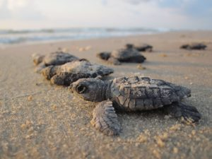 Turtle Conservation Mexico Tour with Dive or Snorkel and Beachside BBQ